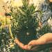 planting_self growth